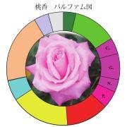 桃香パルファム図
