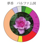 夢香パルファム図